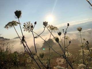 Blumen und Sonnenschein